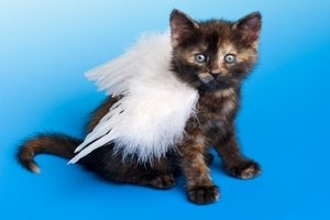 Can Pets Be Angels in the Afterlife? angels, psychic, psychics, find a free psychic, online psychic, find a online psychic free!  Live psychics, psychic medium, psychic predictions, ask now free!