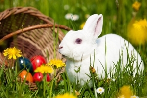 Easter Forecast for Your Zodiac Sign