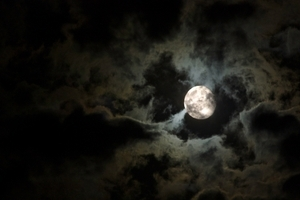 Top Halloween Superstitions Psychic Sylvia Browne, World-renowned Psychic Sylvia Browne pictures